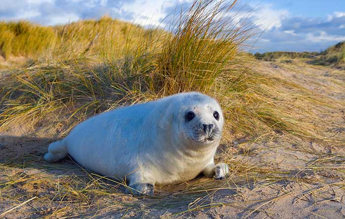 See the Seals at Blakeney Point
